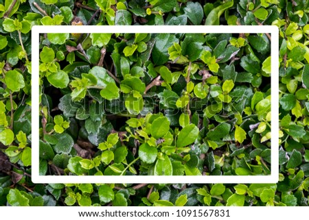 Flat lay nature concept, Layout of green leaves with frame, card note. #1091567831
