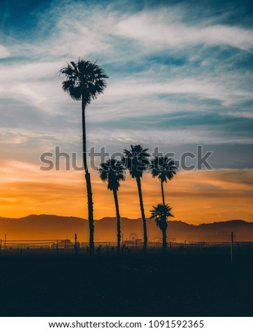 Sunset photo from the Venice Beach, California, with rows of silhouetted palm trees against the Malibu hills ahead.