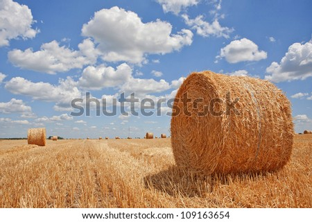 Harvested field with straw bales in summer #109163654