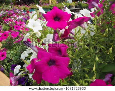 Flowers plants beautiful #1091723933
