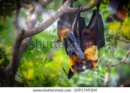 The Flying foxes #1091749304