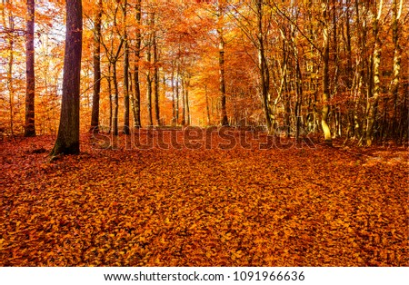 Autumn leaves on ground in autumn forest landscape. Autumn forest landscape #1091966636