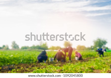 workers work on the field, harvesting, manual labor, farming, agriculture, agro-industry in third world countries, labor migrants, Family farmers. Seacional job. blurred background #1092045800