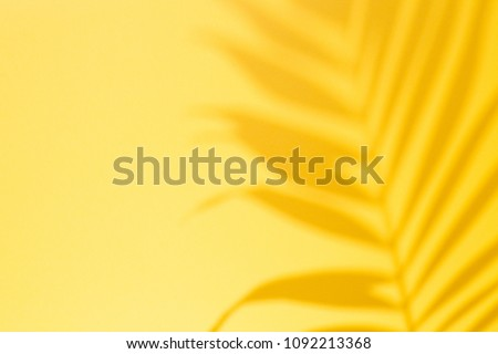 Top view of green tropical leaf Monstera shadow on yellow background. Flat lay. Summer concept with palm tree leaf, copyspace Royalty-Free Stock Photo #1092213368