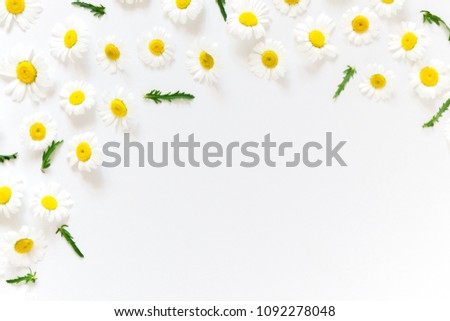 Flowers composition. Border of chamomile on white background. Flat lay, top view, copy space  #1092278048