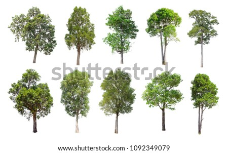 Collection of Isolated Trees on white background. A beautiful trees from Thailand. Suitable for use in architectural design or Decoration work. Used with natural articles both on print and website. #1092349079