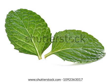 mint leaves isolated on white background.  #1092363017