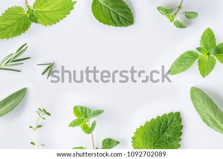 Collection of fresh herbal sage, rosemary, oregano, thyme, lemon balm spearmint and peppermint setup with flat lay on white background #1092702089
