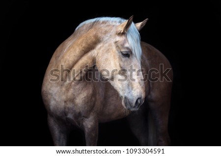 Portrait of a Palomino horse on black background. #1093304591