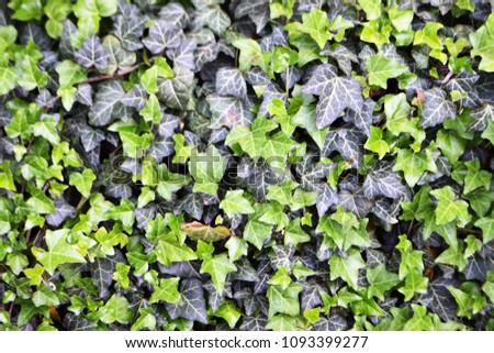 green summer texture #1093399277