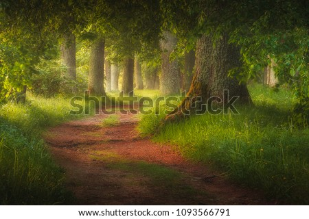 Magic fairy tale forest and forest path leading trough it