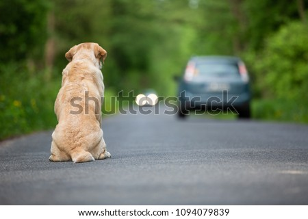 Abandoned dog on the road Royalty-Free Stock Photo #1094079839