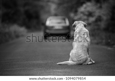 Abandoned dog on the road Royalty-Free Stock Photo #1094079854