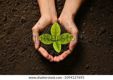 Hands holding and caring a green young plant #1094127695