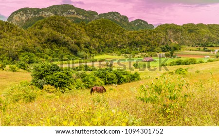 A view of the  landscape of in Vinales, Cuba. #1094301752