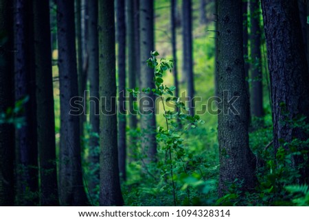 green forest background  #1094328314