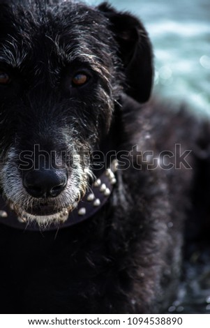 Dog portrait at beach #1094538890