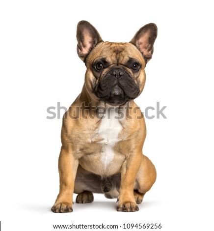 French bulldog sitting against white background #1094569256