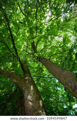 forest trees. nature green wood sunlight backgrounds. #1094599847