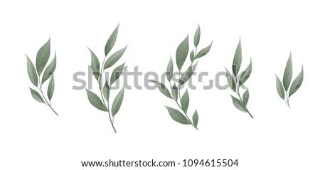 Vector set. Bay leaf. Green leaves on white background. Vector illustration #1094615504