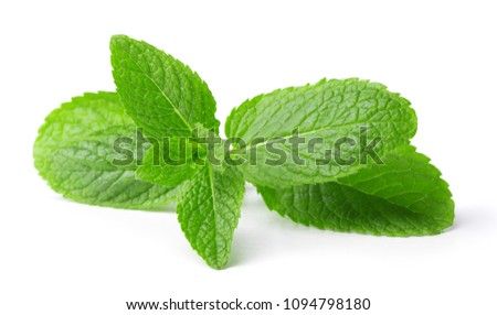single twig of mint leaves isolated on white background #1094798180