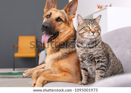Adorable cat and dog resting together on sofa indoors. Animal friendship #1095001973