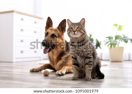 Adorable cat and dog resting together at home. Animal friendship #1095001979
