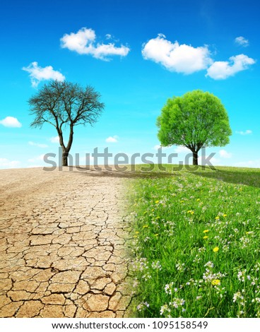 Dry country with cracked soil and meadow with growing tree. Concept of change climate or global warming. #1095158549