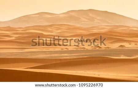 little caravan riding by desert between dune in Morocco #1095226970