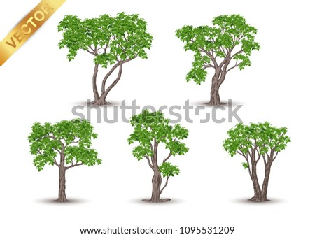 Beautiful tree Realistic  on a white background. #1095531209
