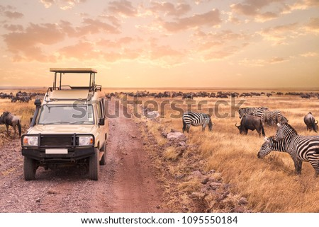 A game drive safari into the wildness animal in Serengeti National Park,Tanzania.