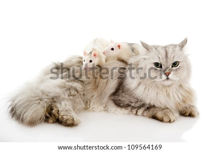 cat with  rats. isolated on white background #109564169