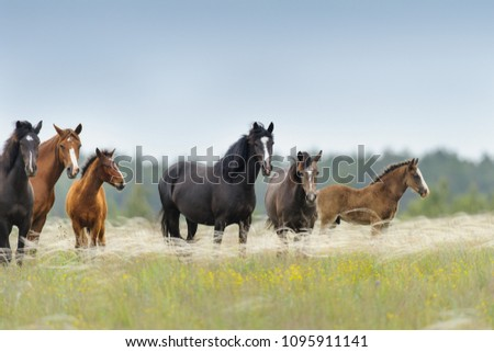 Horse herd with cute foal grazing on pasture #1095911141