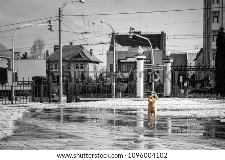 Solitary dog in the city. A stray dog in the city of Chishinau. #1096004102