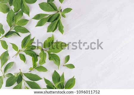 Fresh spring background - green foliage on soft light white wood board, top view, copy space. #1096011752