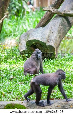 Monkeys in the Zoo #1096265408