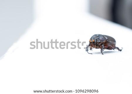 Beetle on white background, #1096298096