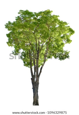 Tree green leave isolated on white background. This has clipping path. #1096329875