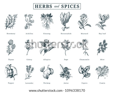 Drawn herbs and spices vector set. Botanical illustrations of organic, eco plants. Used for farm sticker, shop label etc. #1096338170