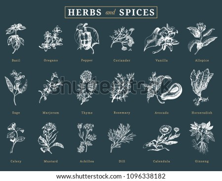 Drawn herbs and spices vector set. Botanical illustrations of organic, eco plants. Used for farm sticker, shop label etc. #1096338182