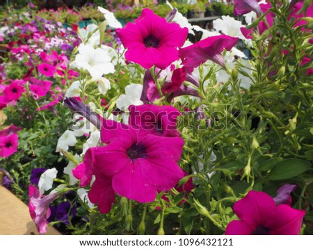 Flowers colourful beautiful #1096432121