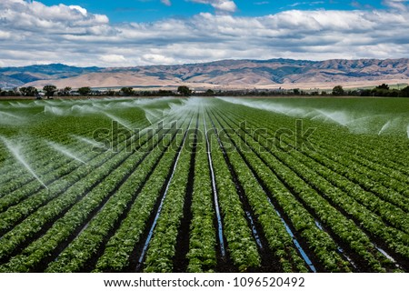 A field irrigation sprinkler system waters rows of lettuce crops on farmland in the Salinas Valley of central California, in Monterey County, on a partly cloudy day in spring.   #1096520492
