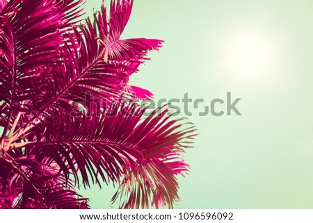 Purple palm trees silhouette against turquoise sky, sun flare. Natural minimalist background. Toned image, filter effect, vibrant colors.