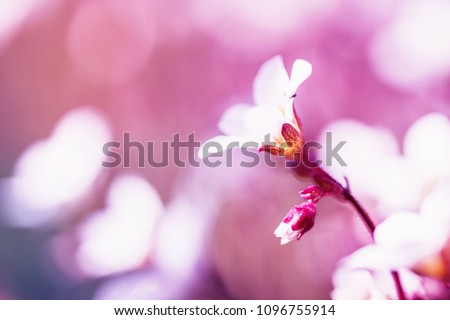 Spring small white flowers on blurred macro background. Spring or summer border template with copy space. Romantic greeting card. Blooming flowers on sunny day. Flowering springtime. Spring background #1096755914