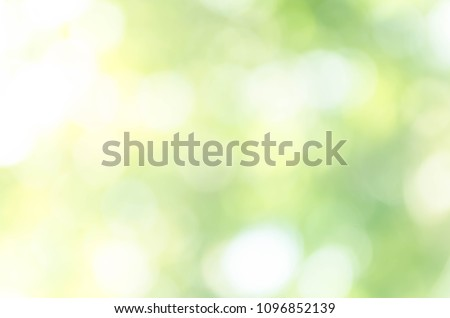 Green bokeh out of focus background from nature forest