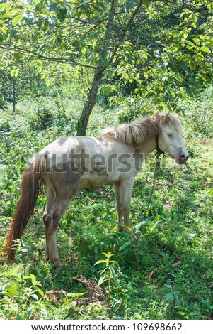 Horse under the Tree #109698662