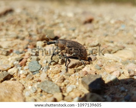 Insect of the countryside in Sardinia #1097139605