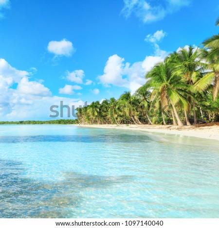 secluded beach on Saona Island, La Romana, Dominican Republic #1097140040