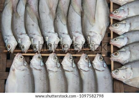 Dried  Freshwater fish of Sakae Krang River,Uthai Thani Province,Thailand,Asia. #1097582798