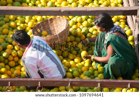 NAGPUR, MAHARASHTRA, INDIA 3 DECEMBER 2014 : An unidentified women worker sort oranges for packaging at a wholesale vegetable market in Nagpur, Maharashtra, Nagpur is known as Orange City. #1097694641